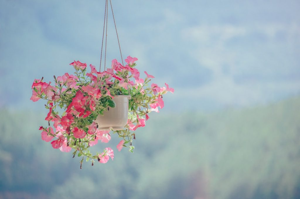 pink decoration flowers